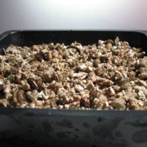 vermiculite growing medium